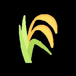 Semillas de maiz y cereales | Agraria San Antón